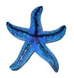 Magnete stella marina in legno