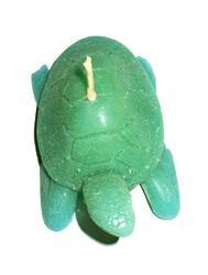 Candela tartaruga
